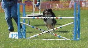 dog jumping over bar jump